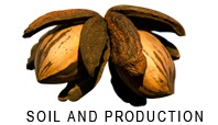 Soil & production of pecan nuts